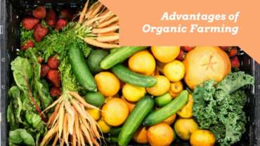 Organics for Sustainability and Lower Cost